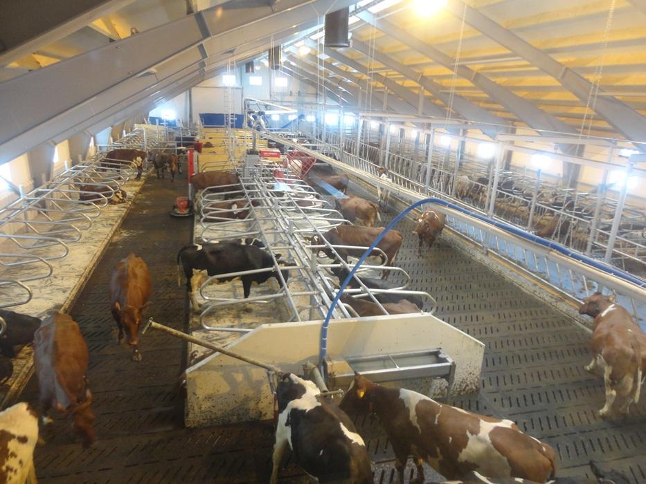 Stal Hellesylt Stallbeleuchtung Rindvieh Stalverlichting koeien d'éclairage bovin barn lighting cows